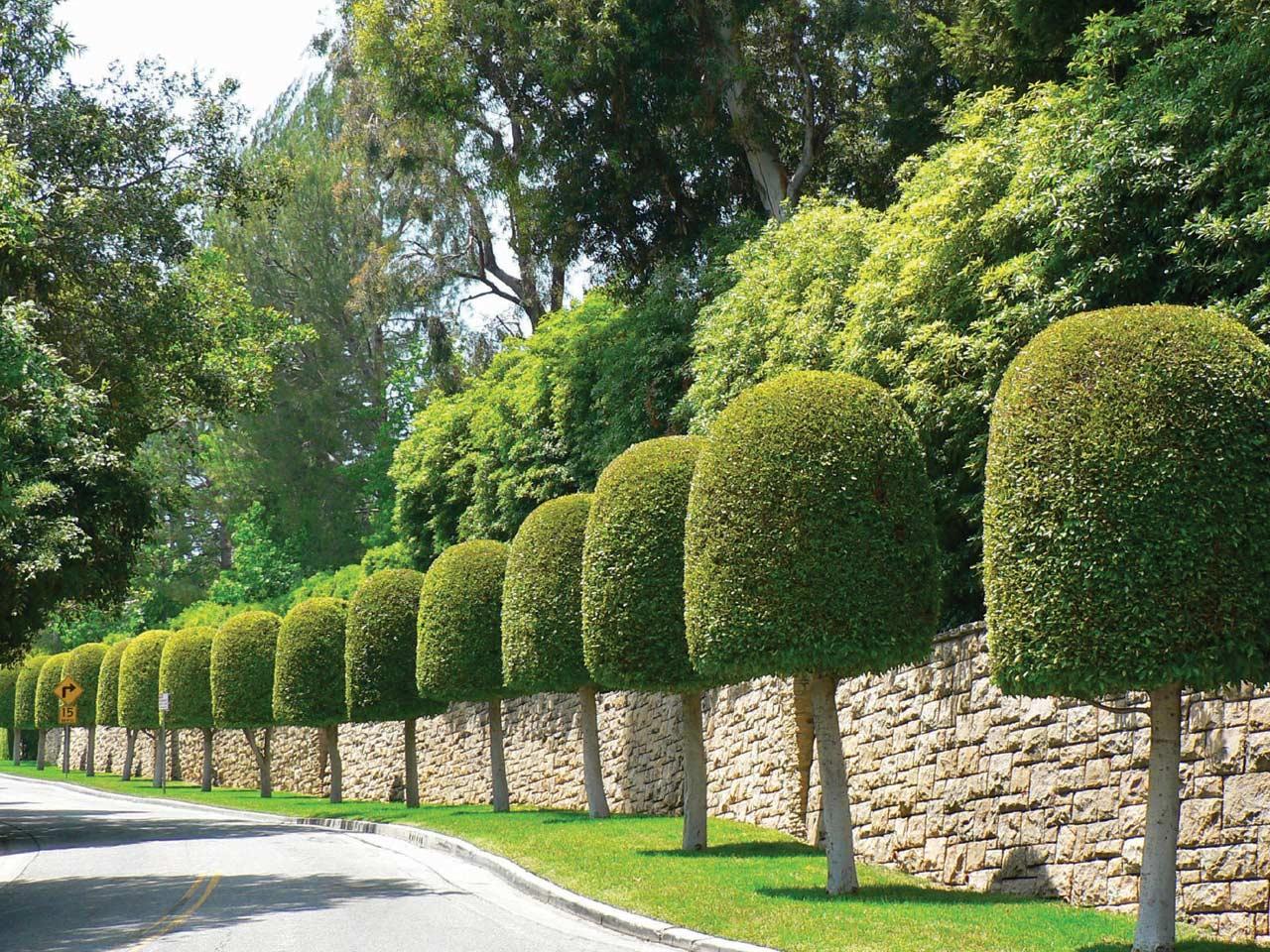 Elagage-esthétique-jardin